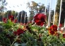 Kırkayak Parkında Sonbahar Güzellikleri
